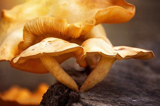 Toadstools, Fungus, Mushroom, Nature, Fungi, Plant