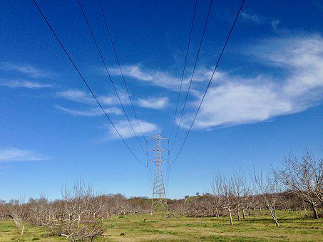 Power Line, Orchard, Rural, Countryside, Green, Nature