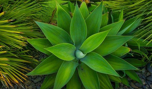 Plant, Green, Star, Nature, Leaf, Close, Green Leaf
