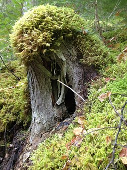 Stump, Moss, Forest, Green, Landscape, Outdoor, Trunk