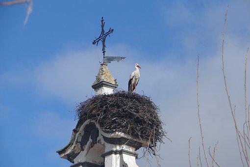 Nest, Ave, Sky, Bell Tower, Architecture, Tower