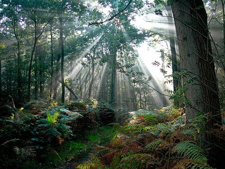 Forest, Netherlands, Sun Rays, Nature, Trees, Morning