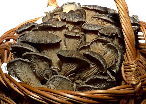 Mushroom, Nature, Food, Fungus, Plant, Ingredient