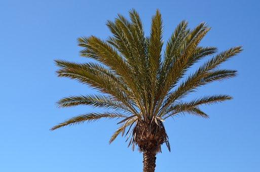 Palm, Sky, Sun, Partly Cloudy, Blue, Summer