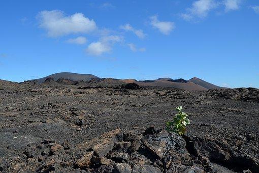 Volcano, Plant, Nature, Landscape, Sky, Lava Stone