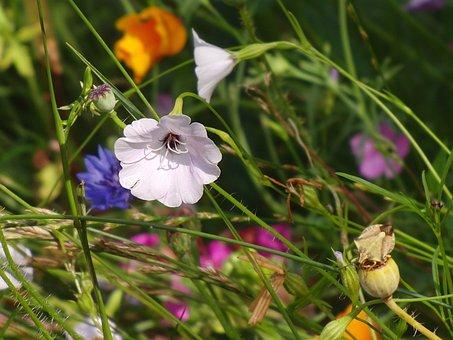Summer Flowers, Flower Meadow, Summer, Nature, Flowers