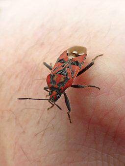 Insect, Beetle, Red And Black, Bug, Detail, Hand