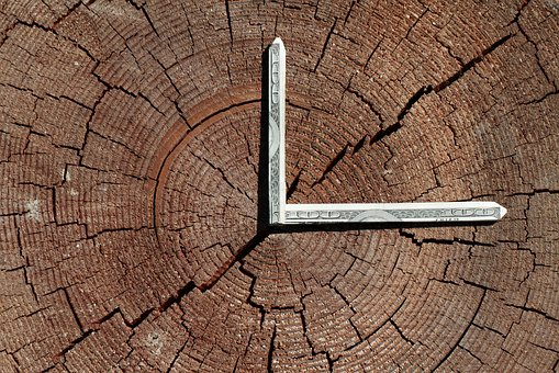 Time Is Money, Tree Rings, Tree, Money, Bill, Nature