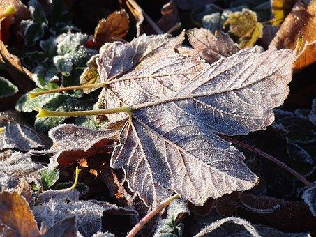Frozen Leaves, Frost, Frozen, Leaf, Cold, Nature