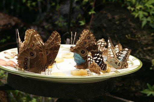Butterfly, Butterflies, Bowl, Spring, Summer, Orange