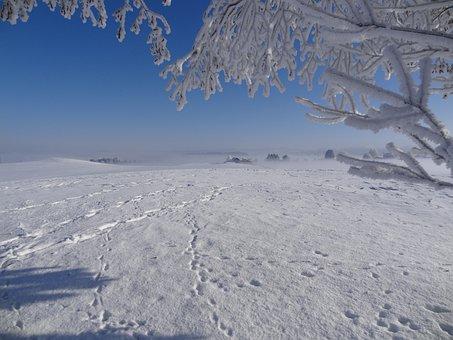 Winter, Sun, Fog, Ripe, Tree, Frost, Hoarfrost, Traces