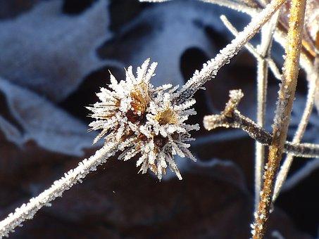 Frost, Frozen Branch, Frozen, Branch, Winter, Cold