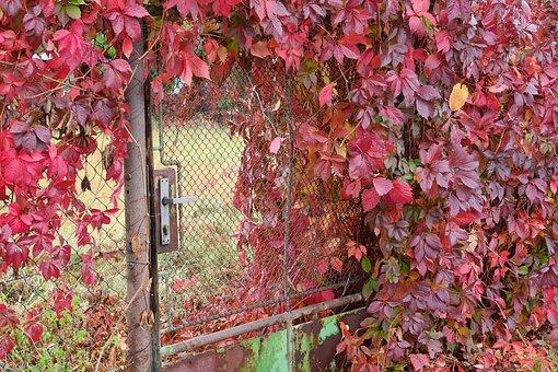 Goal, Overgrown Plot, Gate, Autumn, Garden
