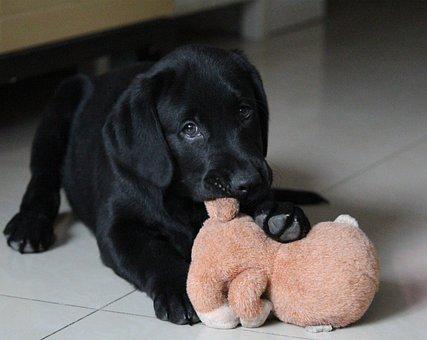 Dog, Sell meng, Play