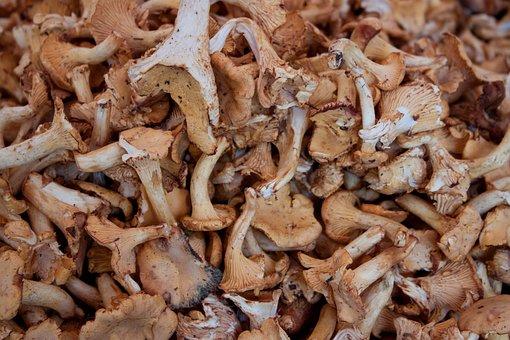 Mushrooms, Eat, Chanterelles, Forest Mushrooms