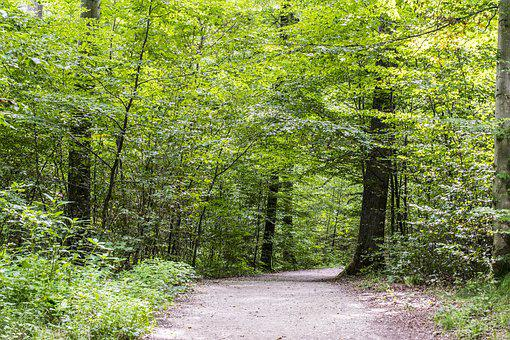 Forest Path, Green, Spring, Forest, Trees, Away, Nature