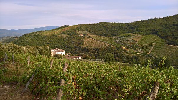 Tuscany, Wine, Winegrowing, Landscape, Series, Vineyard