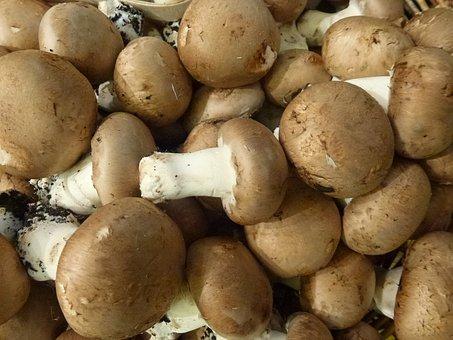 Food, Mushrooms, Vegetable, Fresh, Healthy, Organic