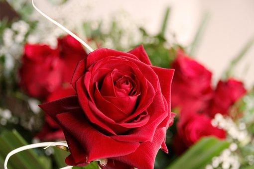 Flower, Blossom, Bloom, Rose, Nature, Plant