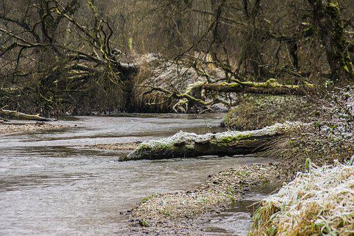 Amper, River, Bach, Forest, Water Running, Leisure