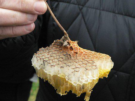Cell, Hive, Beekeeping, Wax, Bee, Radius, Nature