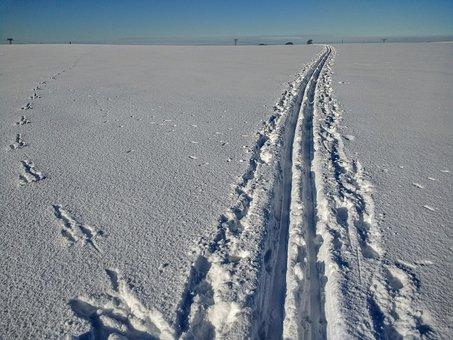 Cross Country Skiing, Ski, Snow, Wintry, Snowy, Winter