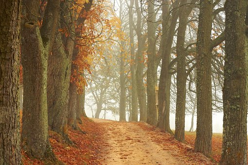 Trees, Away, Autumn, Landscape, Nature, Fog, Mood