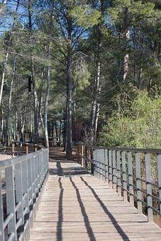 Bridge, Nature, Forest, Web, Away, Wood, Scenic, Park