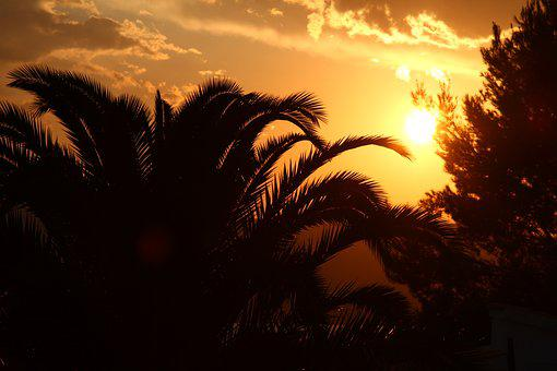Sunset, Palm, Holiday, Tree, Tropics, Island, Hot