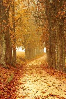 Autumn Mood, Away, Forest, Fog, Autumn, Leaves, Nature
