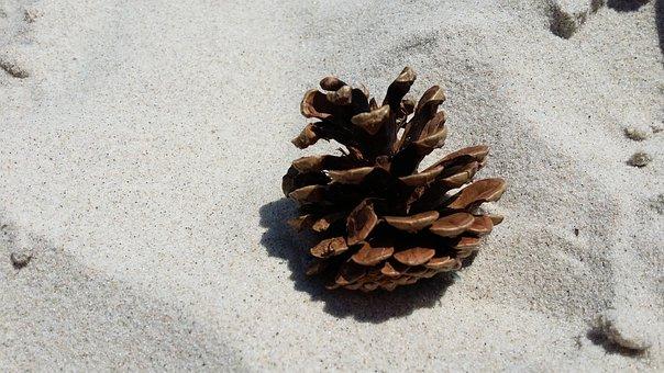 Sand, Beach, Pine Cone, Nature
