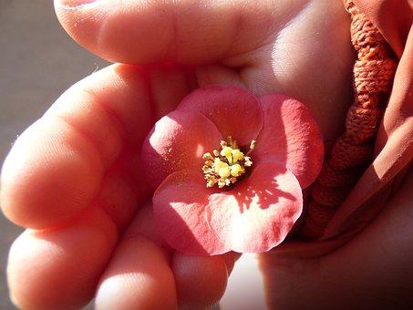 Flower, Pink Flower, Child Hand, Detail, Pollen