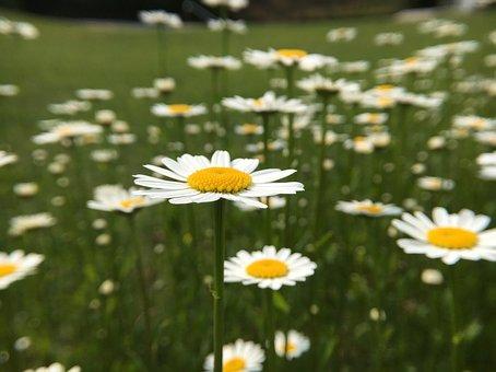 Flowers, Blossom, Bloom, Garden Flower, Close, Bloom