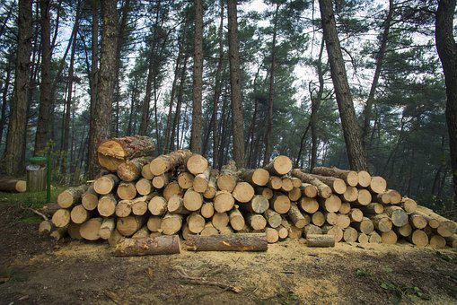 Forest, Trees, Nature, Mountains, Cut, Logs