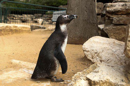 Penguin, Animal, Cute, Zoo, Wild, Nature, Funny