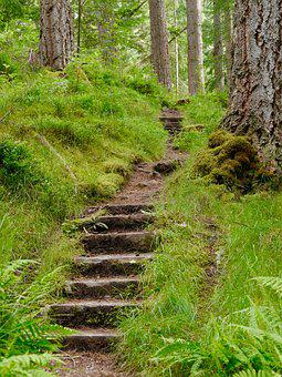 Forest, Steps, Trees, Wood, Grass, Greenery