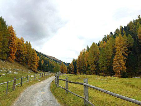Autumn, Away, Forest, Engadin, Trees, Nature, Fence