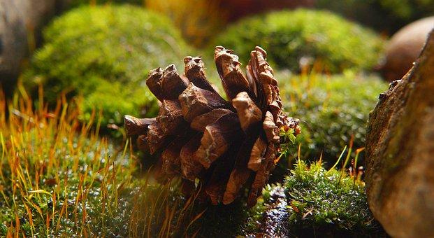 Nature, Green, Moss, Plants, Pine Cone, Macro