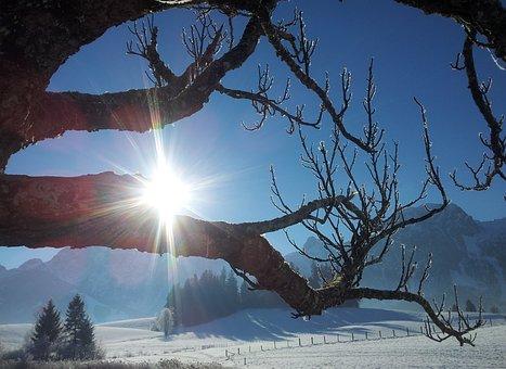 Winter Sun, Winter, Snow, Back Light, Sun, Wintry