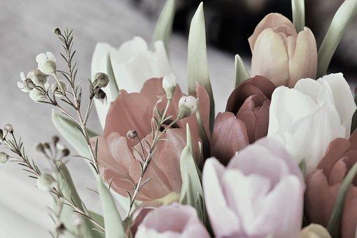 Tulips, Blossom, Bloom, Flower, Plant, Spring, Retro