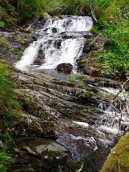 Stream, Water, Forest, Greenery, Scotland