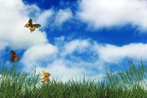 Rush, Butterflies, Clouds, Sky, Garden, Live, Summer