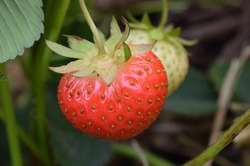 Strawberry, Close, Fruits, Red, Fruit, Food, Sweet