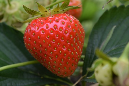 Strawberry, Close, Red, Fruit, Food, Sweet, Delicious