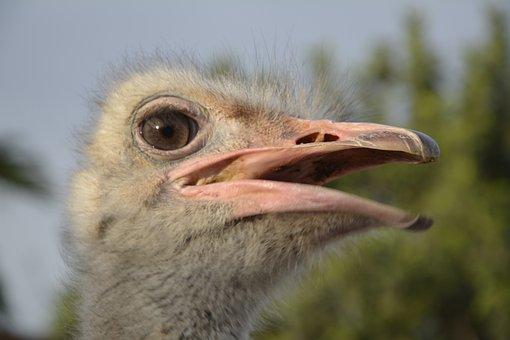 Bouquet, Ostrich Head, Bird, Wildlife Photography