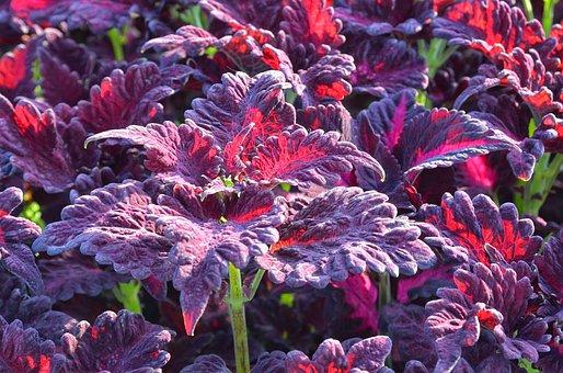 Plant, Strong Color, Leaves, Splendor, Flora, Bright