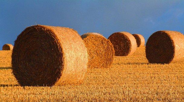 Bales, Straw, Harvest, Landscape, Farmland, Harvesting