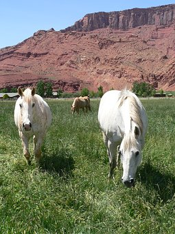 Horses, Grazing, Colorado, Pasture, Ranch, Animal, Mare