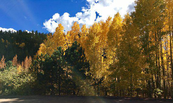 Autumn, Leaves, Tree, Fall, Nature, Leaf, Yellow