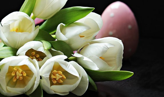 Tulips, Tulipa, Easter Egg, Pink Easter Egg, Pink